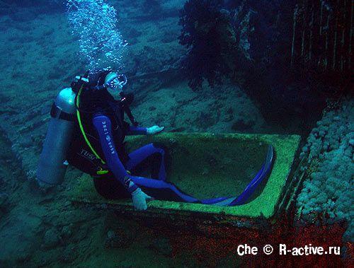 И видео подводного мира красного моря
