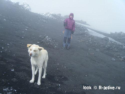 Поход на Этну. Пёс - наш терпеливый гид